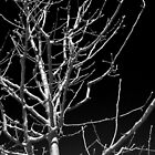 BRANCHES MONOCHROMATIC by fsmitchellphoto