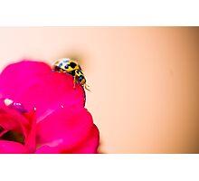 Yellow Ladybird on Red Patel Photographic Print