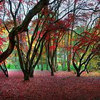 The Glory of Autumn by Derek Green