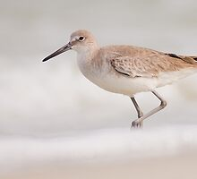 Willet in the Snow by Phillip  Simmons