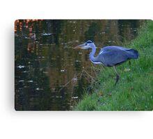 Heron on the Hunt Canvas Print