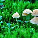 Mini mushrooms in December..... by Adri  Padmos