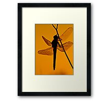 Dragonfly in sunset Framed Print