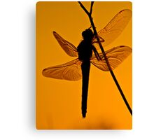 Dragonfly in sunset Canvas Print