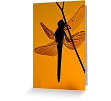 Dragonfly in sunset Greeting Card