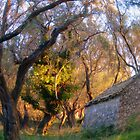 The  Little house at the end of my lane... by fruitcake