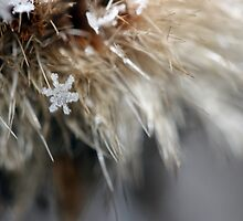a snow flake   by Angela Mastrantonio