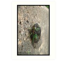 Green Cicada Art Print