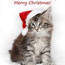 Kitten in a santa hat! by sarahnewton