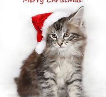 Kitten in a santa hat! by sarahnewton