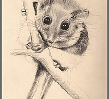 Little Poss by Louise Page