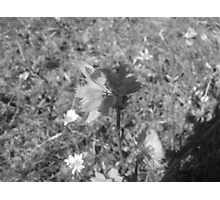 Lonley Flower Photographic Print