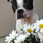 Doggie Daisys  by Amy Francen