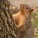Tree Hugger by lorilee