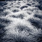 Button Grass by Bart The Photographer