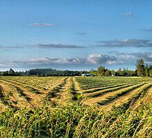Cut Grass by jeanniechris
