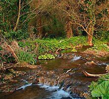 Stream near Broadboyne Bridge Co.Meath by Martina Fagan