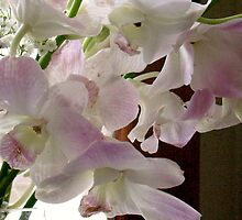 Deluxe Orchids by MarianBendeth
