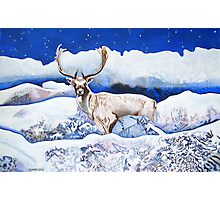 Snow Stag  Photographic Print