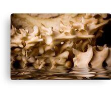 Water Bones Canvas Print