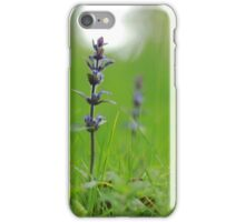 Bugle emerges in lush green pasture iPhone Case/Skin