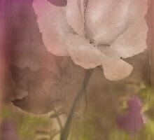 Softly by Barbara Manis