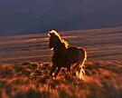Blazing Stallion by Arla M. Ruggles