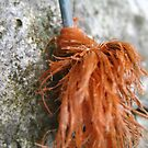 Frayed Tree Twine by millymuso