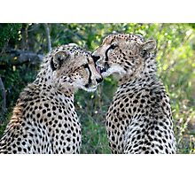 Cheetah Brothers Photographic Print
