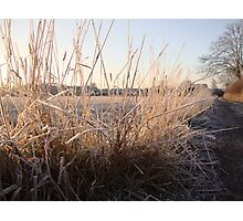 Cold Grass Photographic Print