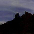 Twilight Meditation by leystan