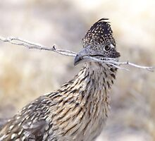 Mrs. Roadrunner by Jillian Johnston