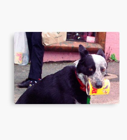 oi clever canine Canvas Print