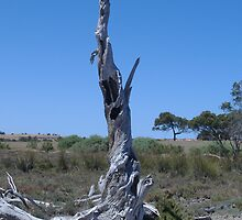 Salt tree - Lake Albert Station by Garrie Negus