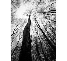 Reaching for the sky Photographic Print