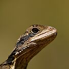 Mini Dinosaur by Malcolm Katon