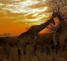 good night kiss by mamba