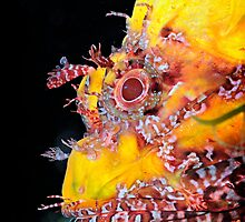 A scorpionfish, up close and personal by Aziz T. Saltık