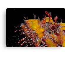 Scorpionfish staring contest Canvas Print