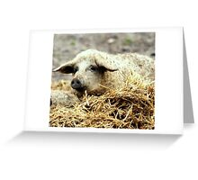 A bed of straw Greeting Card