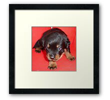 "And they call it ""Puppy Love"" ..... Framed Print"