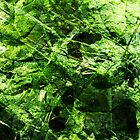 abstract green by designerpeteuk