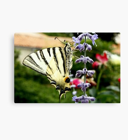 Tiger Butterfly Canvas Print