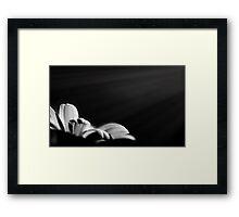 fiat lux Framed Print