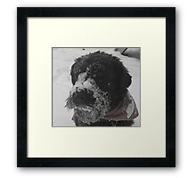 All I Want For Christmas.... Framed Print