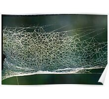 Spider web with dew Poster