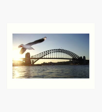 Sydney Bridge Seagull Art Print