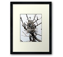 Great Blue Rookery Framed Print