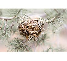 Nest in the trees Photographic Print
