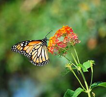 Monarch Gardening by Angela Pritchard